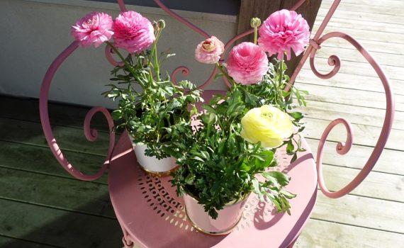 Blommor som lyser upp