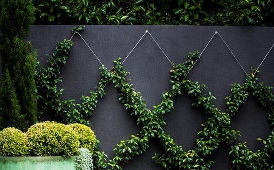 Ett mönster med murgröna på väggen