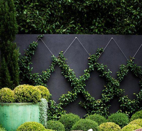 Murgröna i mönster