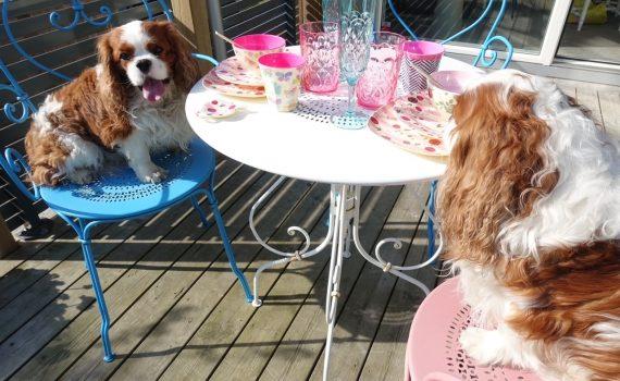 Middag för två hundar