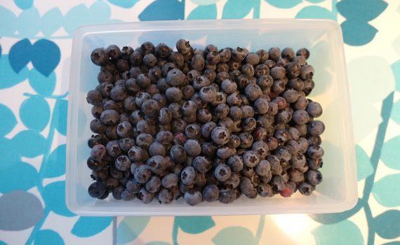 Frysa in amerikanska blåbär